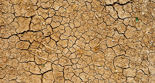 California drought an opportunity for Canadian agriculture
