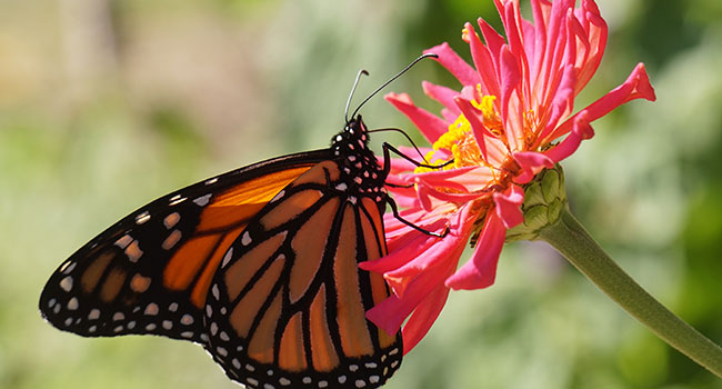 On the trail of a monarch deep in the heart of Mexico