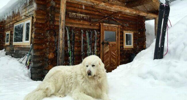 Rosie (indifferently) guards Boulder Hut