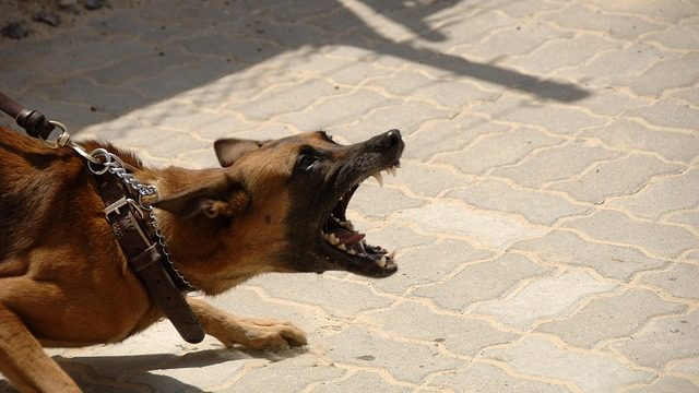 Why being bitten by a dog was more pleasant than your customer service