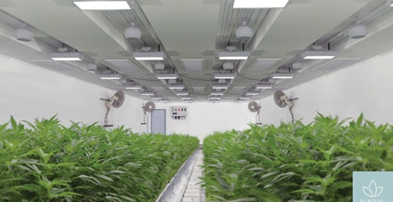 Sundial Growers, feds supporting cannabis research
