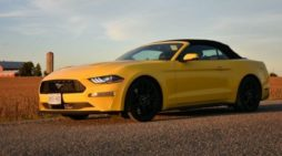 This pony has the speed and performance of a thoroughbred