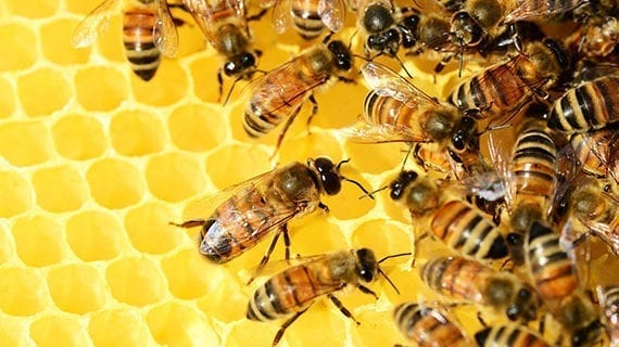 Currie neighbourhood installs beehives for sustainability