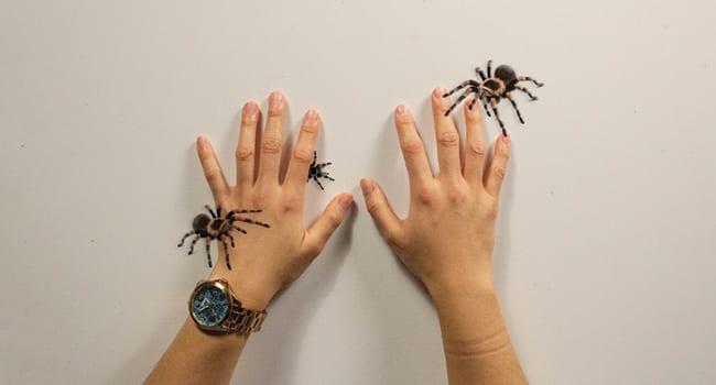 spiders game univerity of alberta